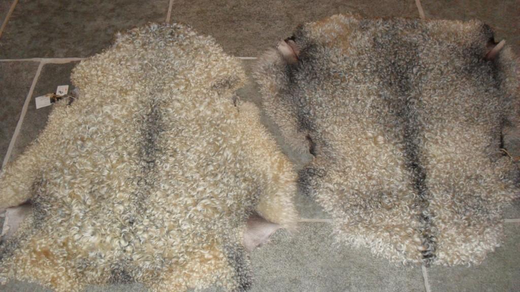 2 beautiful sheep skins